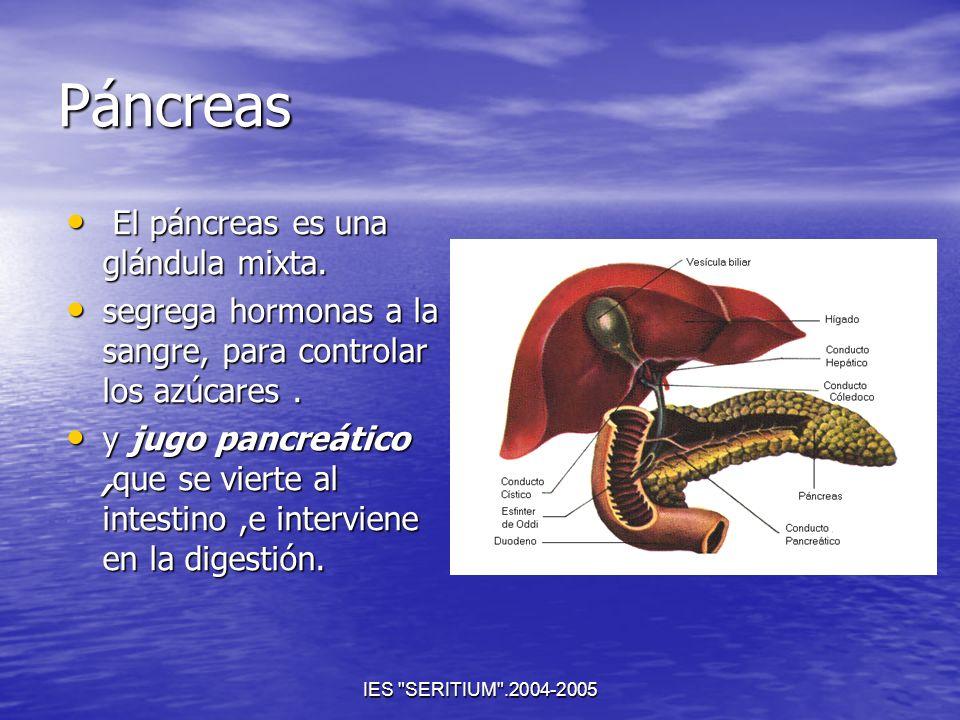 Páncreas El páncreas es una glándula mixta.