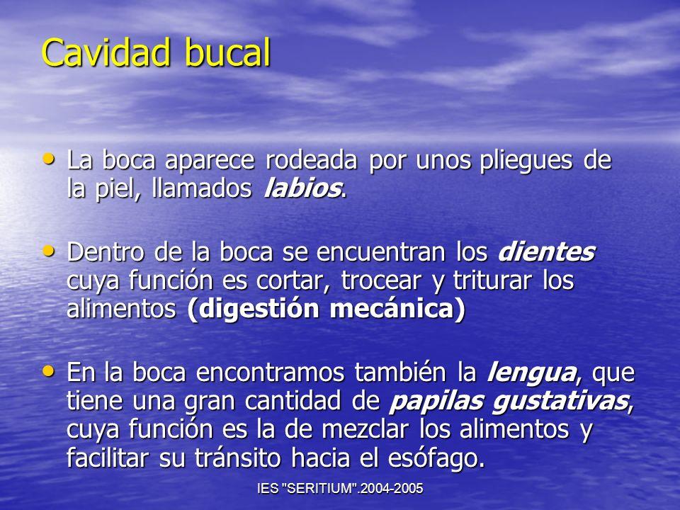 Cavidad bucal La boca aparece rodeada por unos pliegues de la piel, llamados labios.