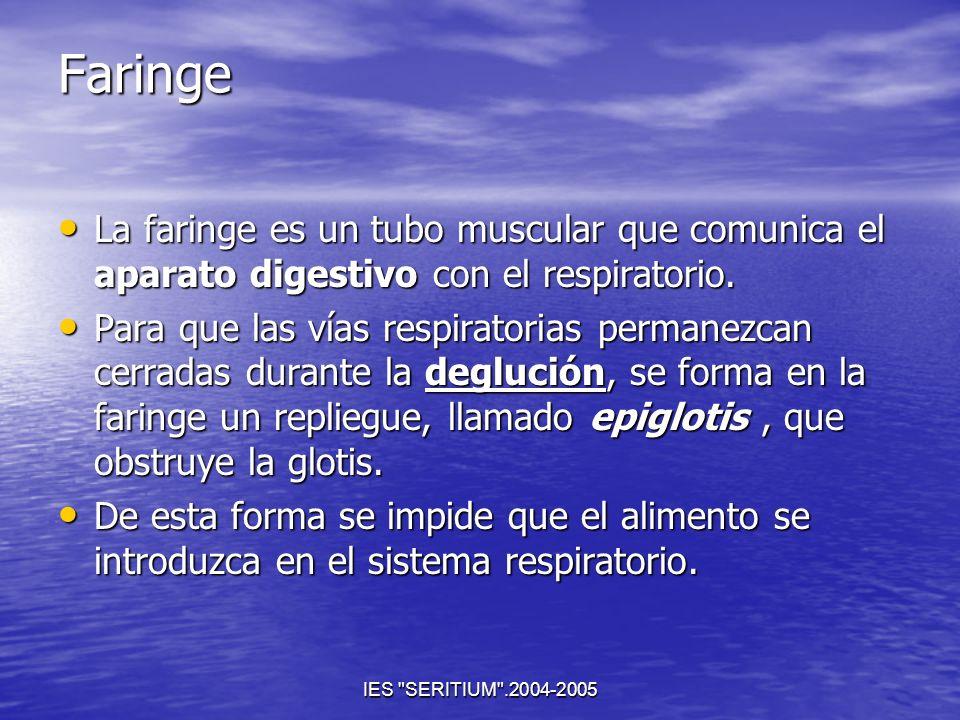 FaringeLa faringe es un tubo muscular que comunica el aparato digestivo con el respiratorio.