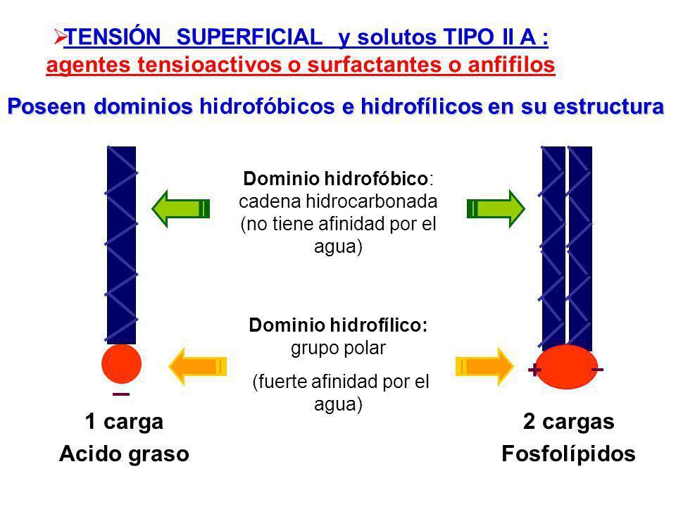 TENSIÓN SUPERFICIAL y solutos TIPO II A : agentes tensioactivos o surfactantes o anfifilos