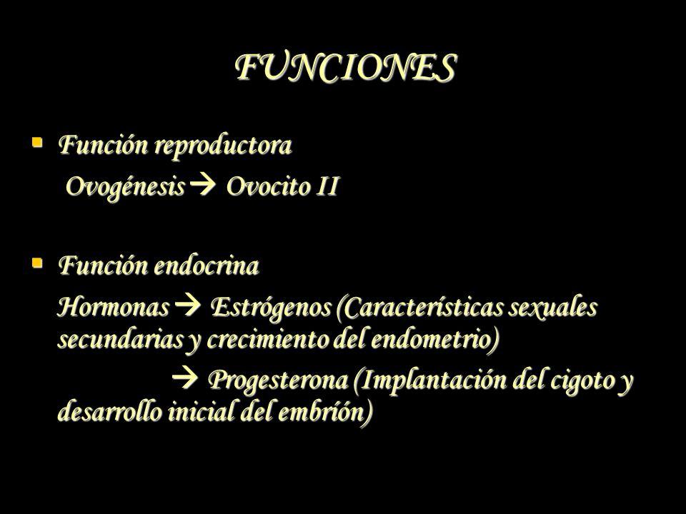 FUNCIONES Función reproductora Ovogénesis  Ovocito II