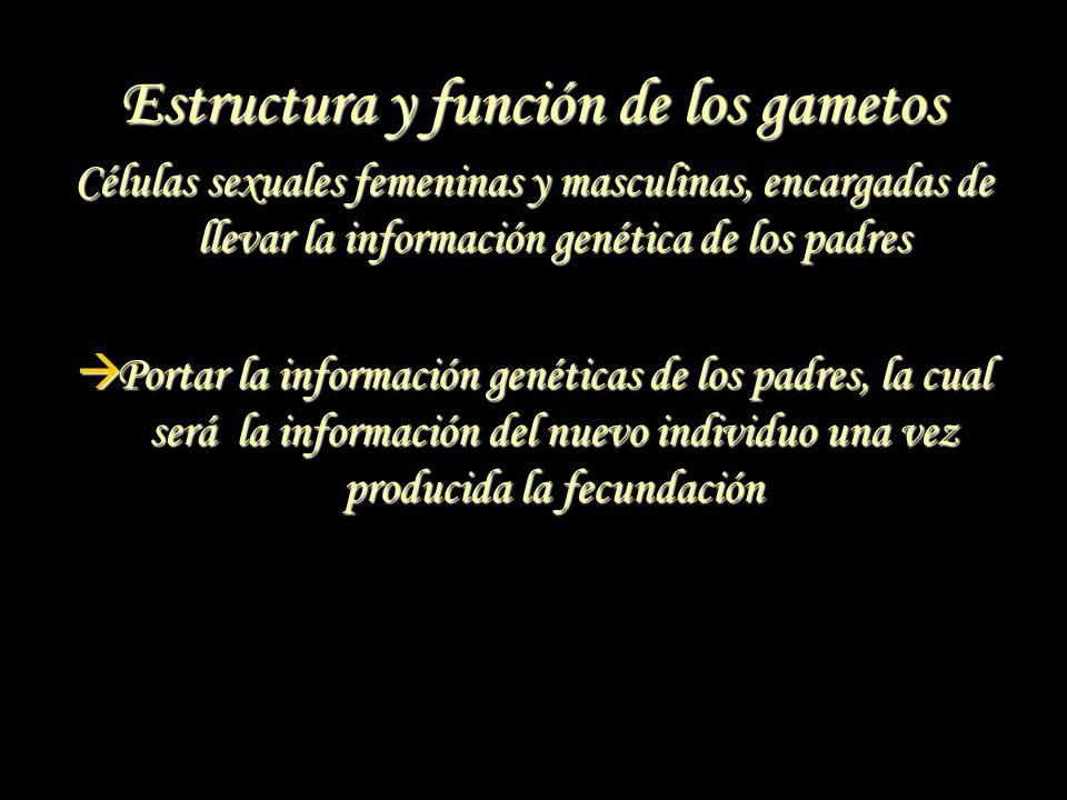 Estructura y función de los gametos