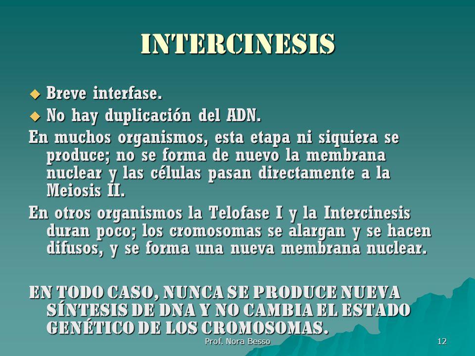 intercinesis Breve interfase. No hay duplicación del ADN.