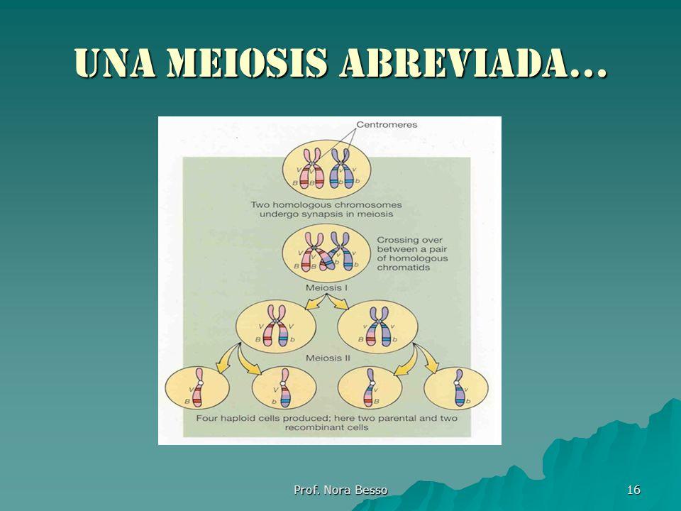 Una meiosis abreviada…