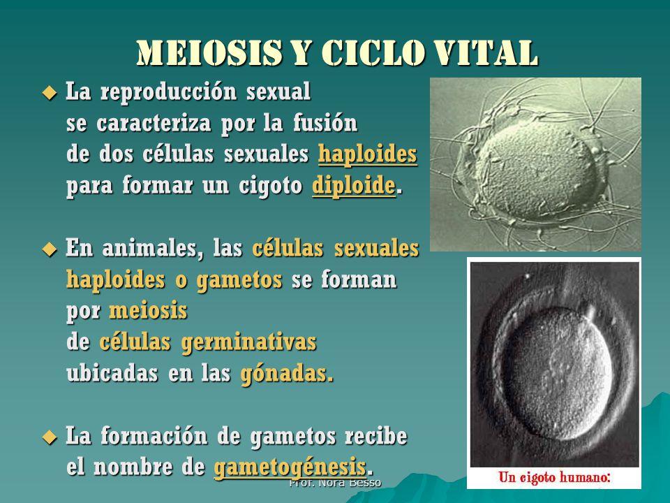 Meiosis y Ciclo Vital La reproducción sexual