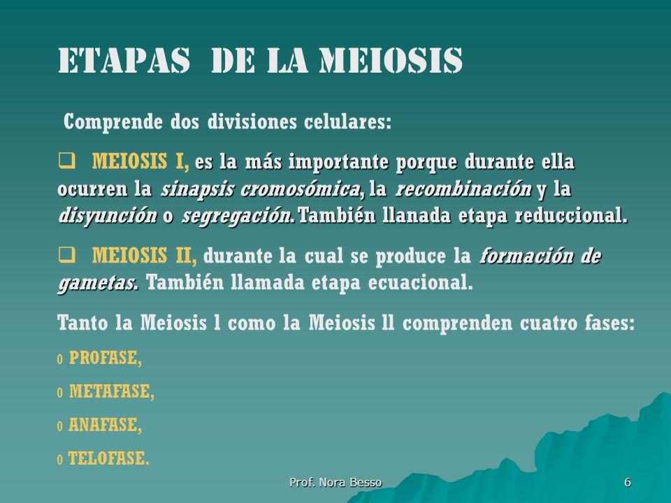 Etapas de la meiosis Comprende dos divisiones celulares: