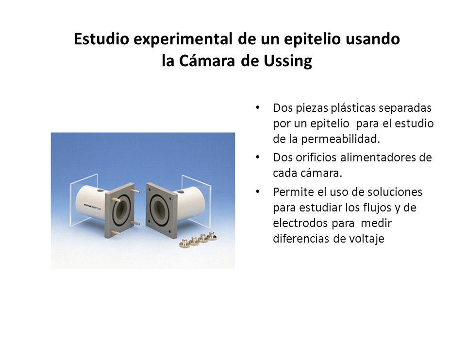 Estudio experimental de un epitelio usando la Cámara de Ussing