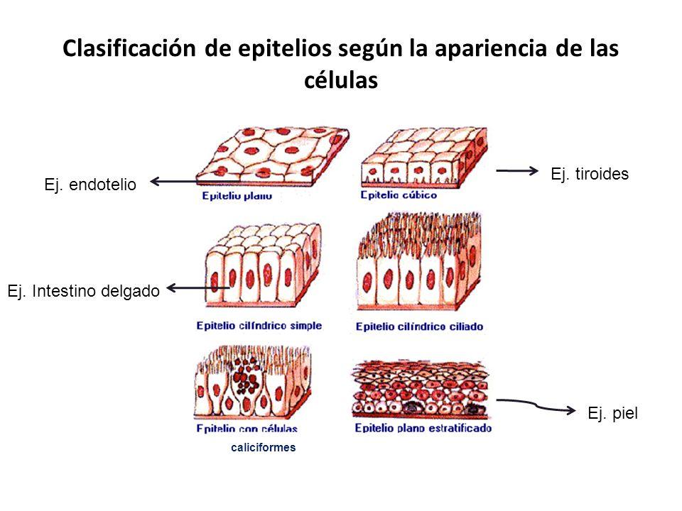 Clasificación de epitelios según la apariencia de las células
