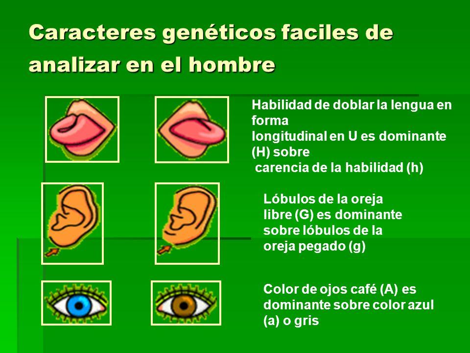Caracteres genéticos faciles de analizar en el hombre