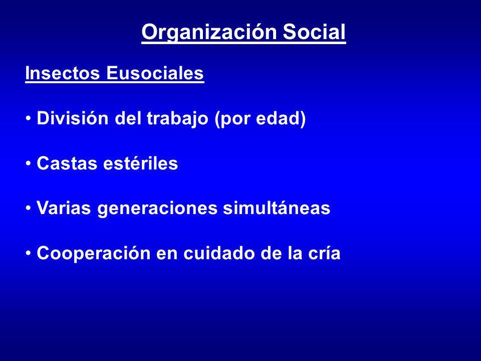 Organización Social Insectos Eusociales