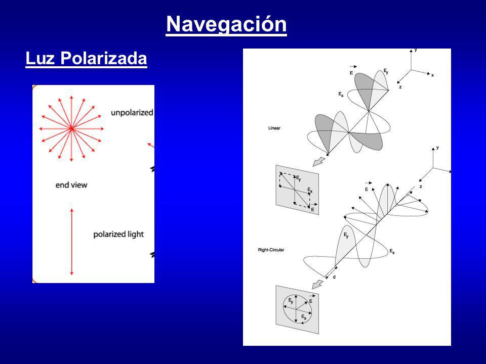 Navegación Luz Polarizada