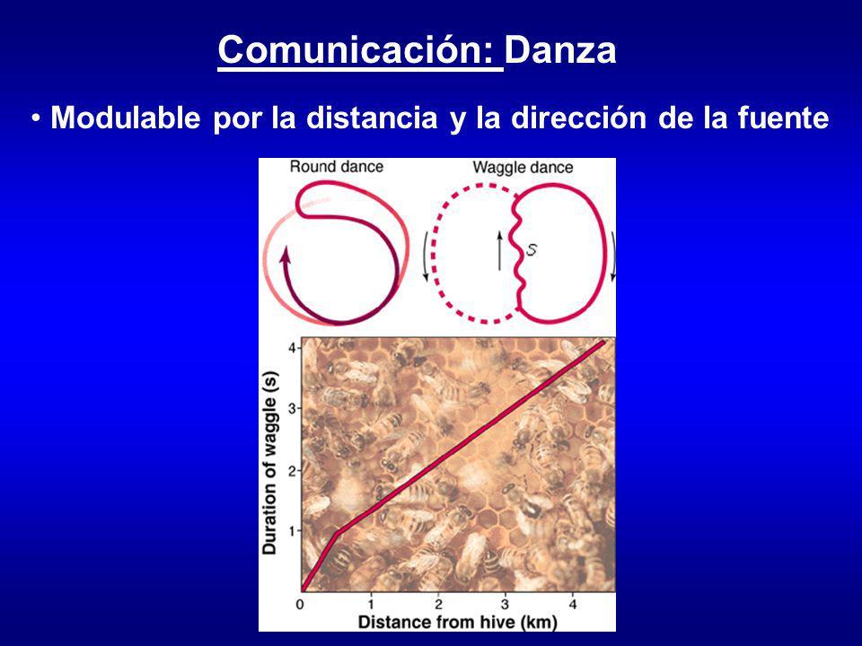 Comunicación: Danza Modulable por la distancia y la dirección de la fuente