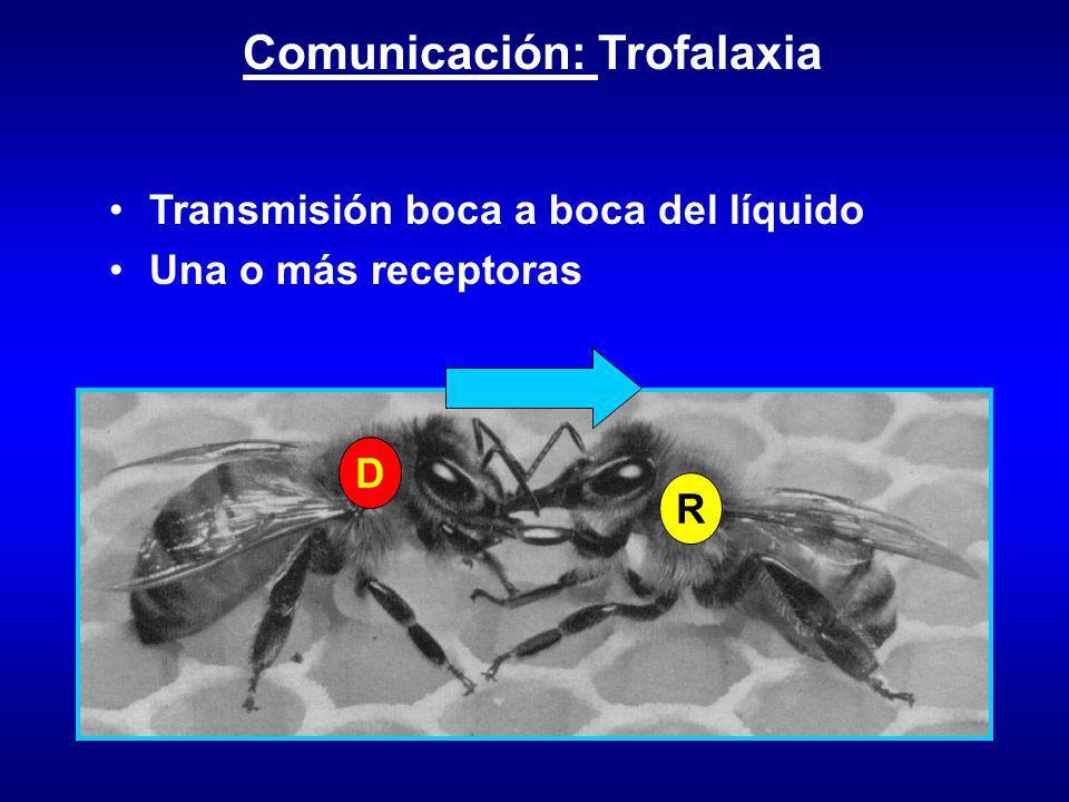 Comunicación: Trofalaxia