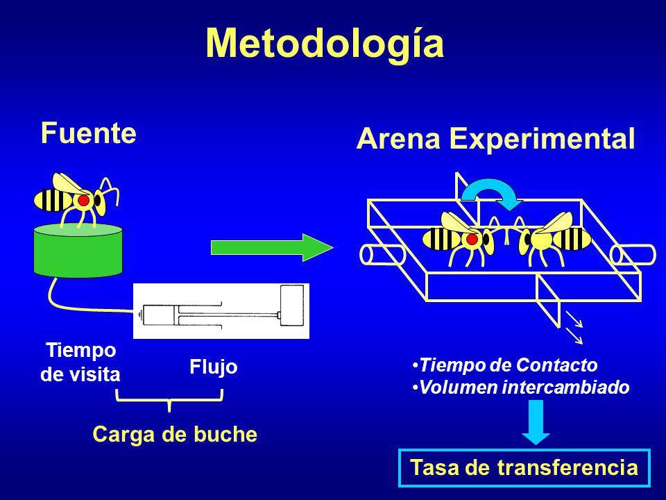 Metodología Fuente Arena Experimental Carga de buche