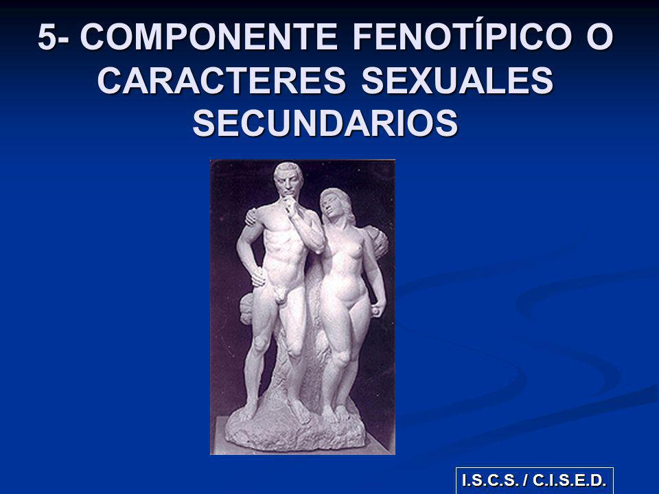 5- COMPONENTE FENOTÍPICO O CARACTERES SEXUALES SECUNDARIOS