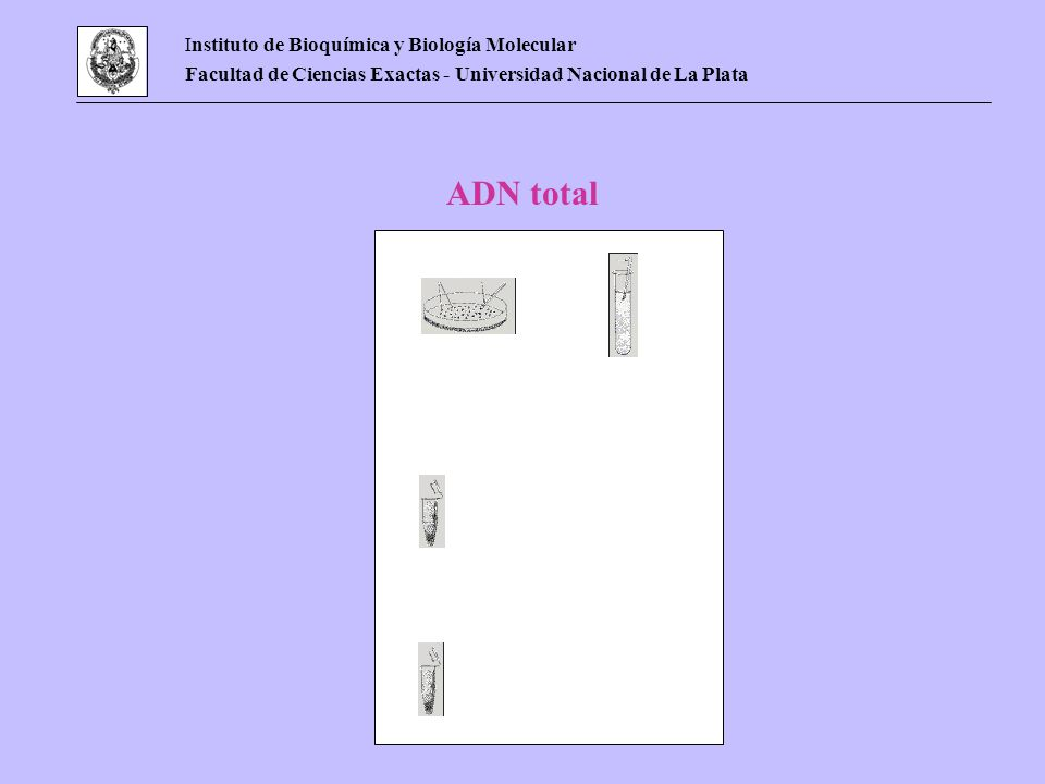 ADN total Instituto de Bioquímica y Biología Molecular