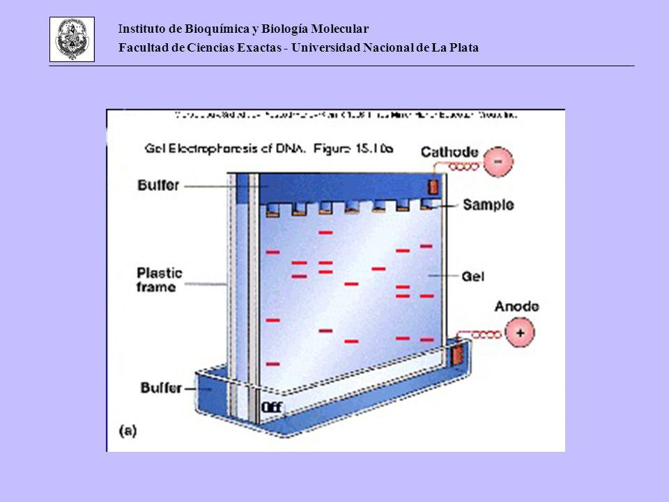 Instituto de Bioquímica y Biología Molecular