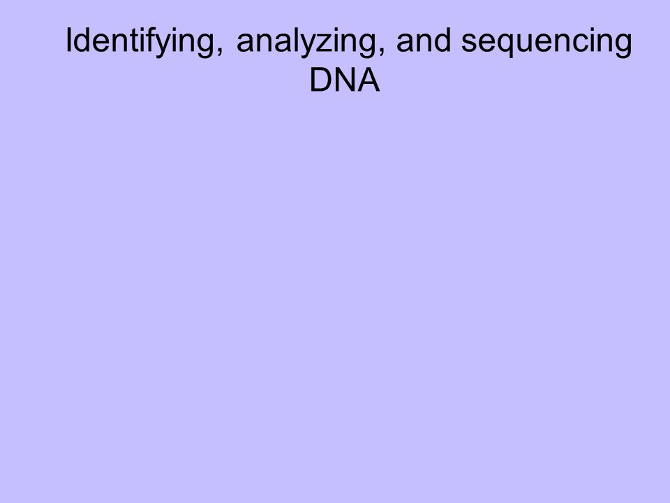 Identifying, analyzing, and sequencing DNA