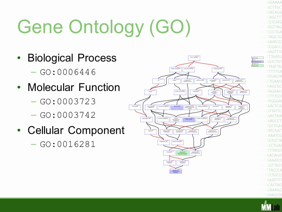 Gene Ontology (GO) Biological Process Molecular Function