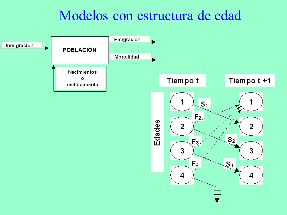 Modelos con estructura de edad