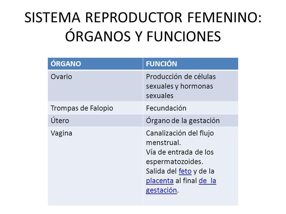SISTEMA REPRODUCTOR FEMENINO: ÓRGANOS Y FUNCIONES