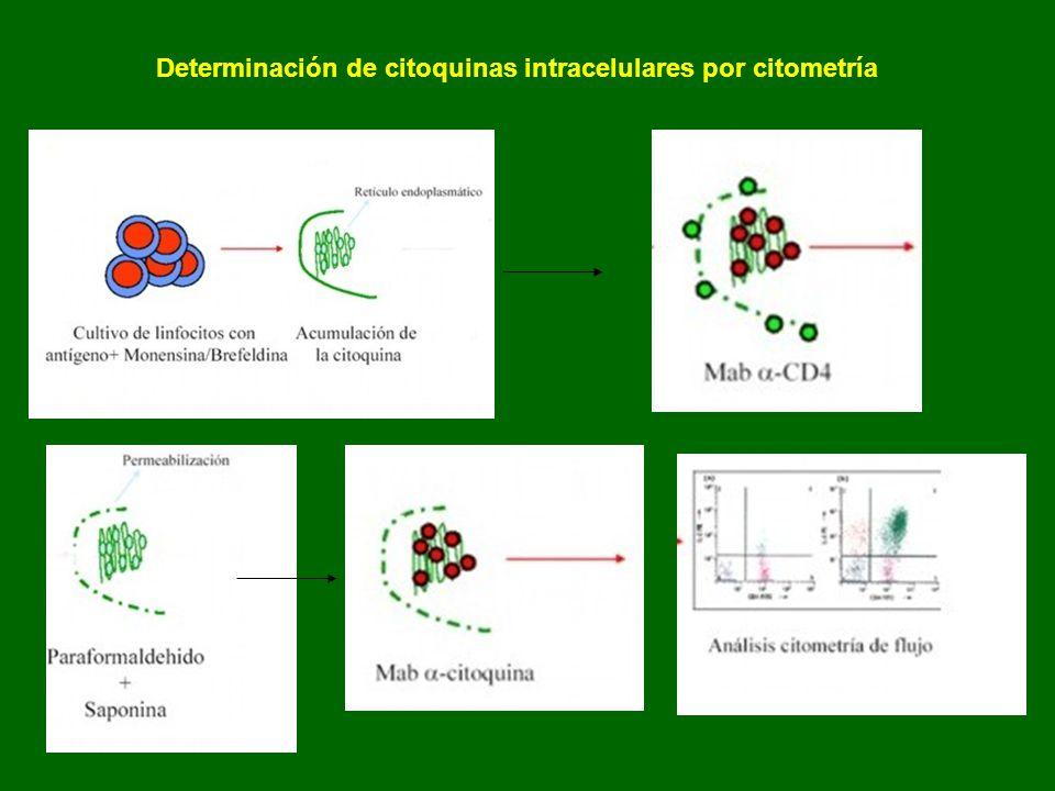 Determinación de citoquinas intracelulares por citometría