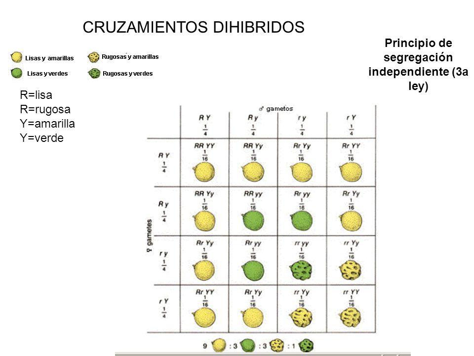 Principio de segregación independiente (3a ley)