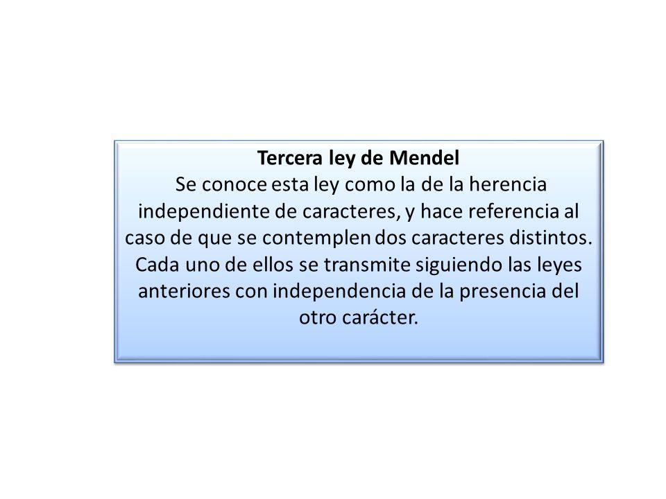 Tercera ley de Mendel