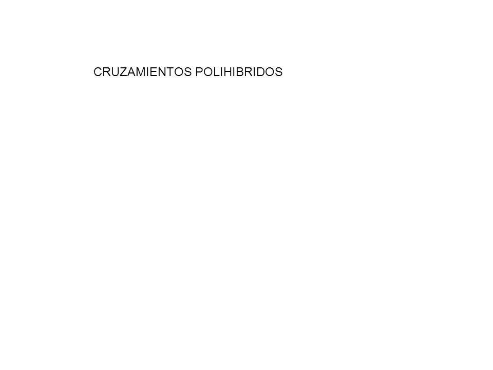 CRUZAMIENTOS POLIHIBRIDOS