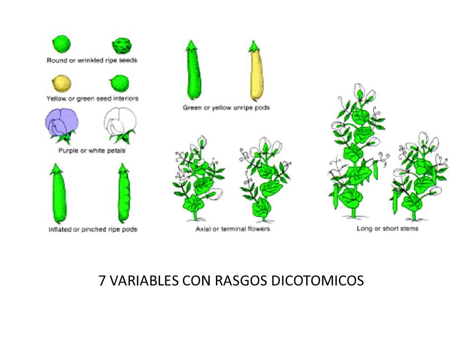 7 VARIABLES CON RASGOS DICOTOMICOS