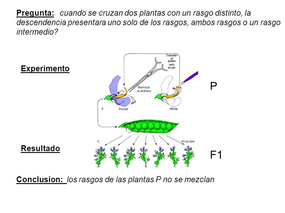 Pregunta: cuando se cruzan dos plantas con un rasgo distinto, la descendencia presentara uno solo de los rasgos, ambos rasgos o un rasgo intermedio