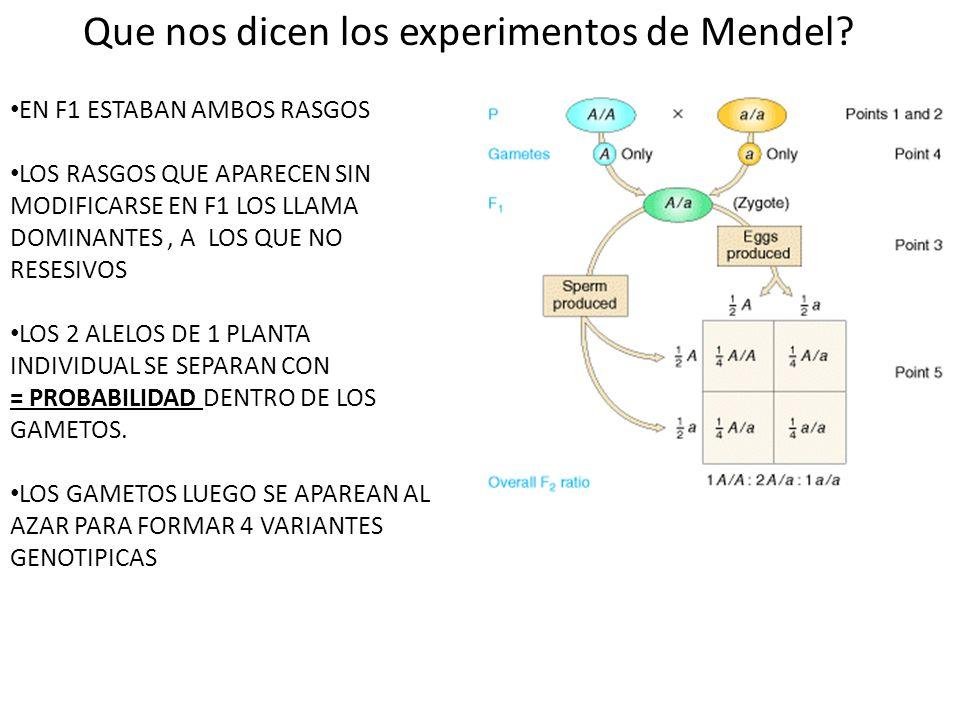 Que nos dicen los experimentos de Mendel