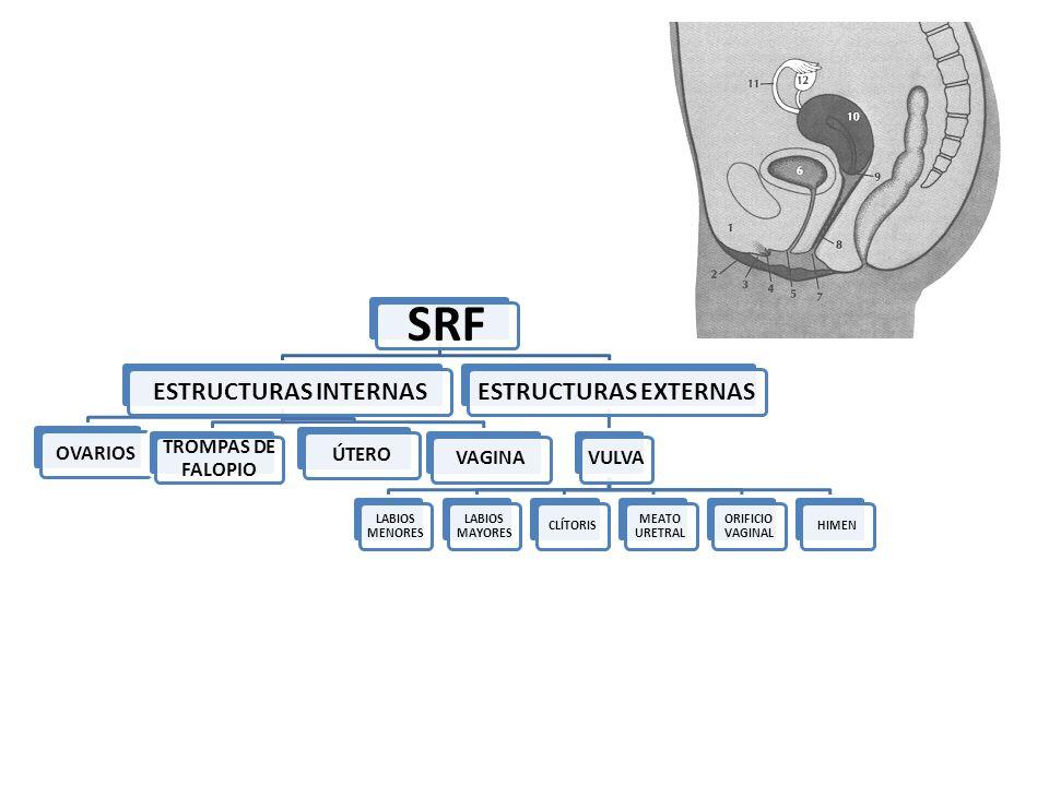 SRF ESTRUCTURAS INTERNAS ESTRUCTURAS EXTERNAS OVARIOS