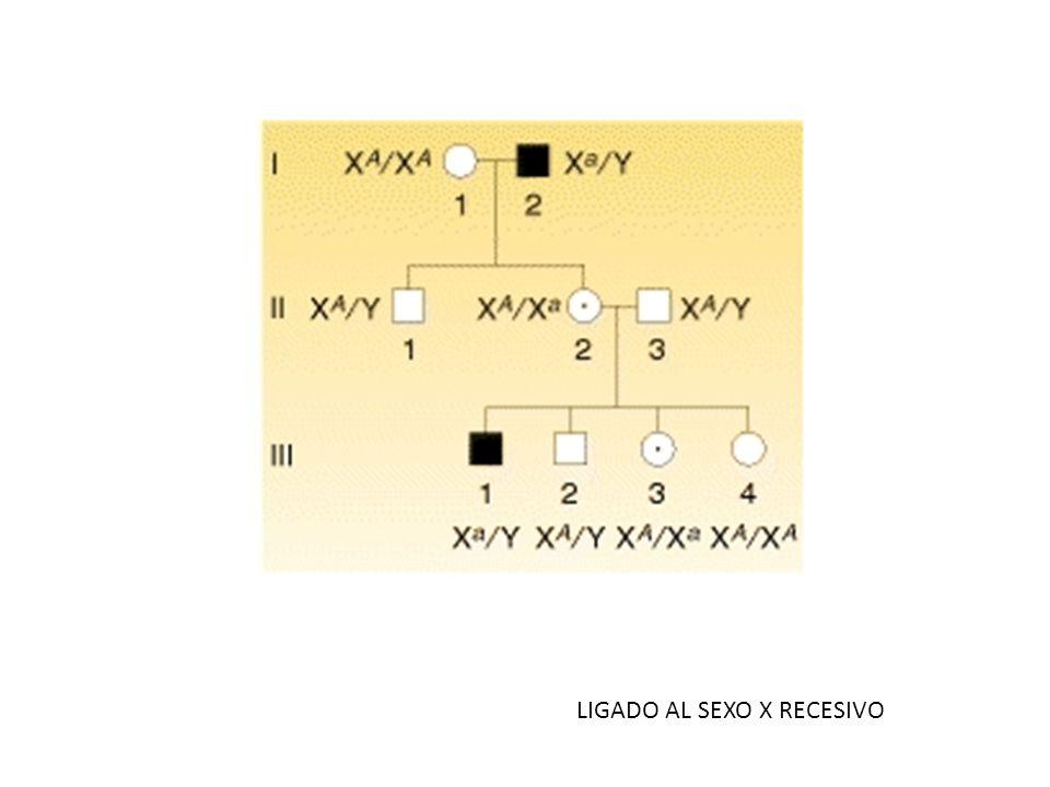 LIGADO AL SEXO X RECESIVO