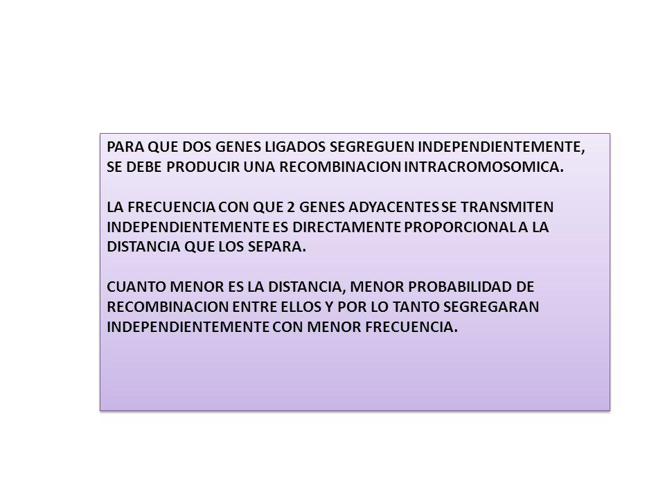 PARA QUE DOS GENES LIGADOS SEGREGUEN INDEPENDIENTEMENTE, SE DEBE PRODUCIR UNA RECOMBINACION INTRACROMOSOMICA.