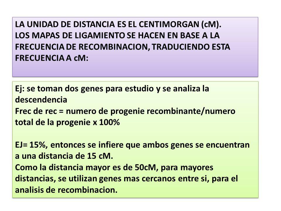 LA UNIDAD DE DISTANCIA ES EL CENTIMORGAN (cM).