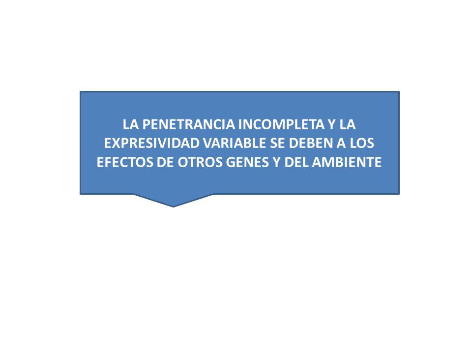LA PENETRANCIA INCOMPLETA Y LA EXPRESIVIDAD VARIABLE SE DEBEN A LOS EFECTOS DE OTROS GENES Y DEL AMBIENTE