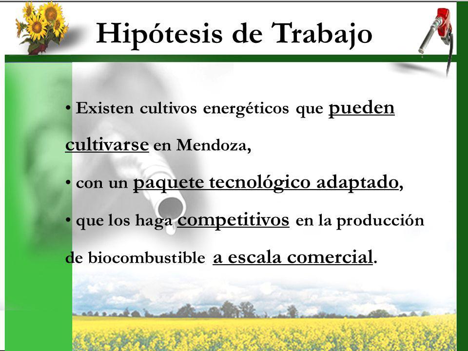 Hipótesis de Trabajo cultivarse en Mendoza,