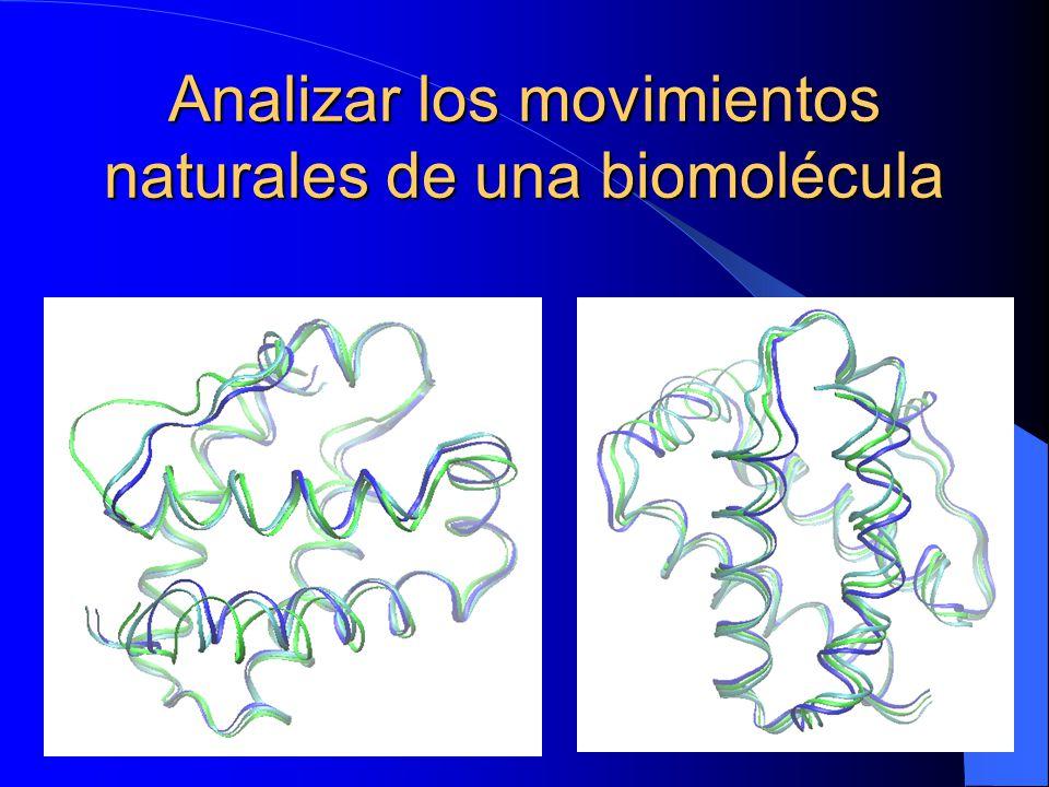 Analizar los movimientos naturales de una biomolécula