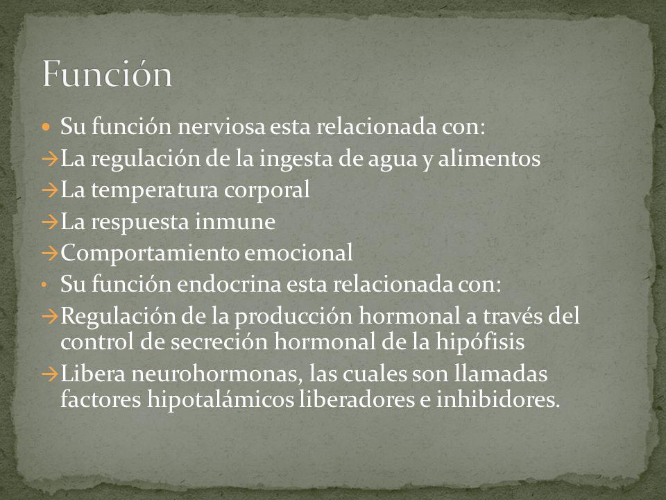 Función Su función nerviosa esta relacionada con: