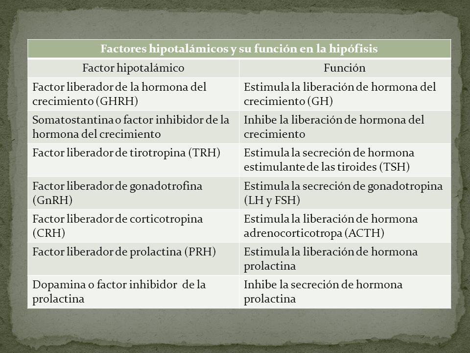 Factores hipotalámicos y su función en la hipófisis