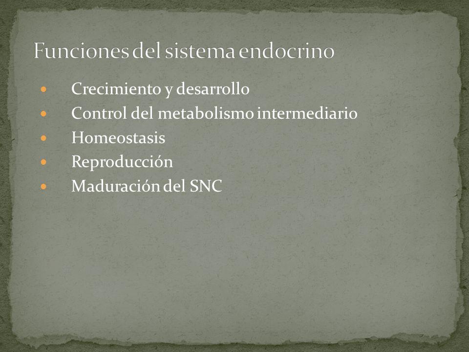 Funciones del sistema endocrino