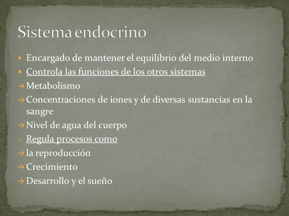 Sistema endocrino Encargado de mantener el equilibrio del medio interno. Controla las funciones de los otros sistemas.