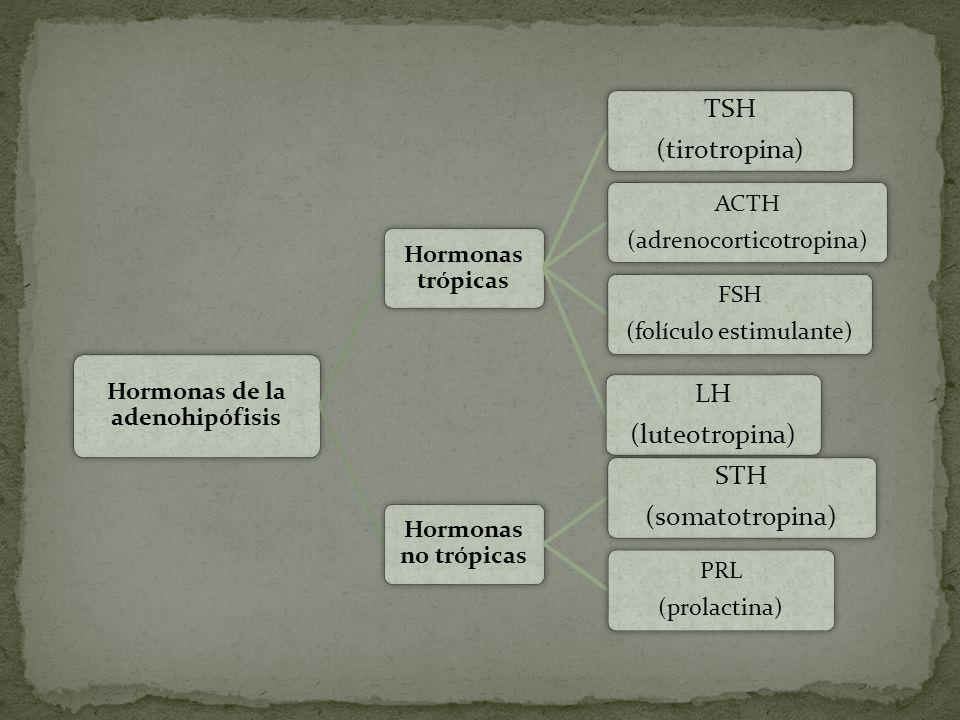 Hormonas de la adenohipófisis