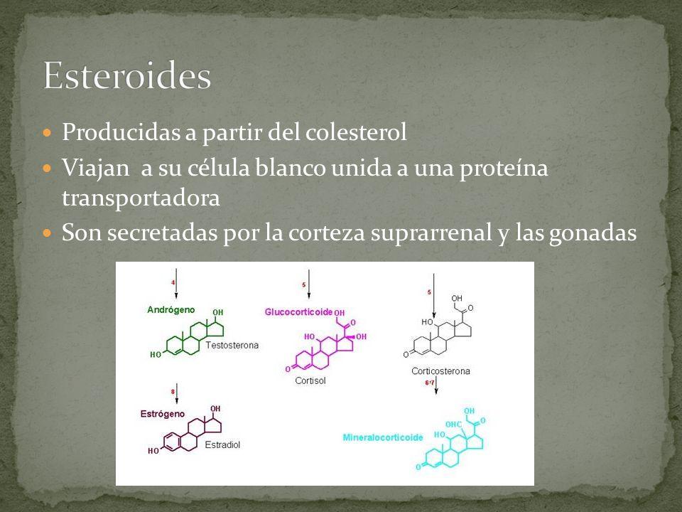 Esteroides Producidas a partir del colesterol