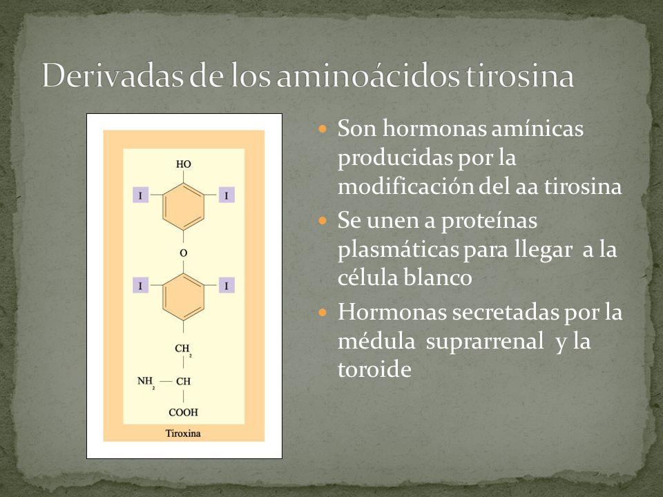 Derivadas de los aminoácidos tirosina