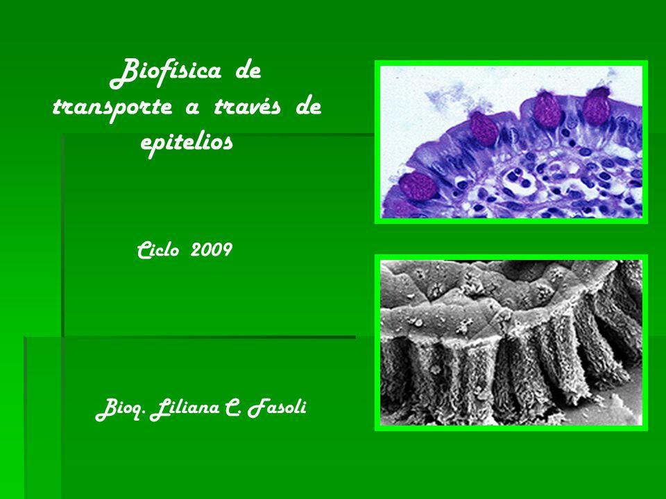 Biofísica de transporte a través de epitelios