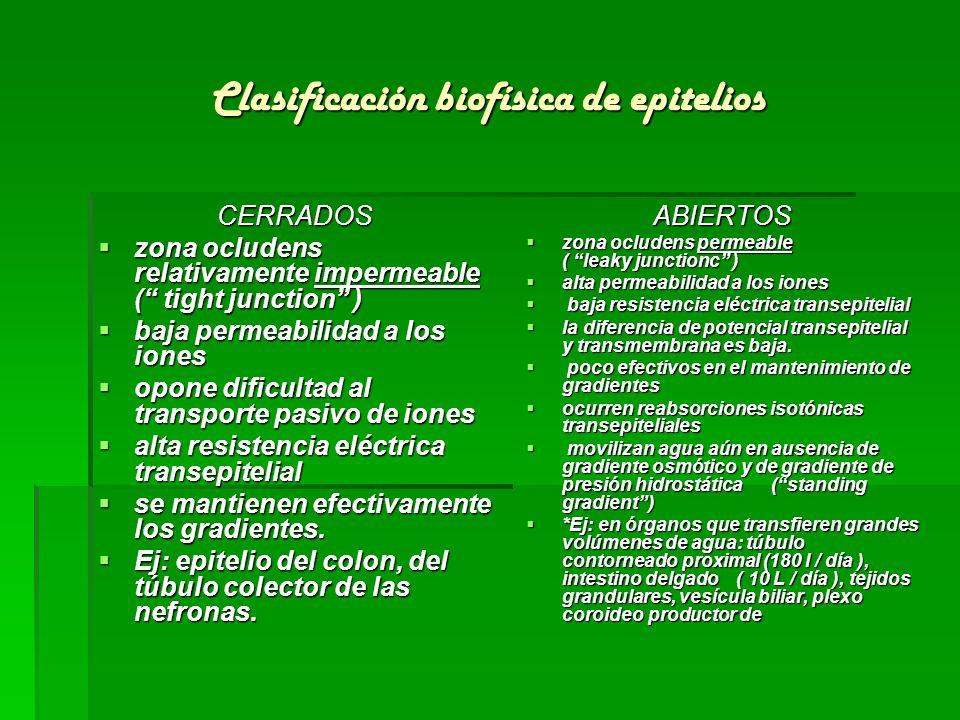 Clasificación biofísica de epitelios