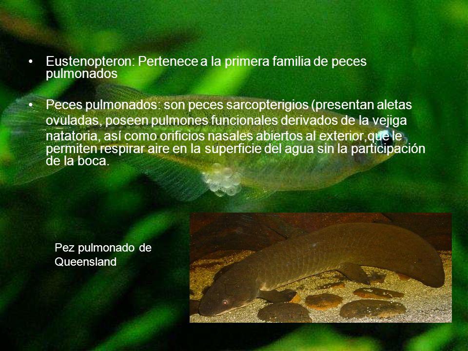 Eustenopteron: Pertenece a la primera familia de peces pulmonados