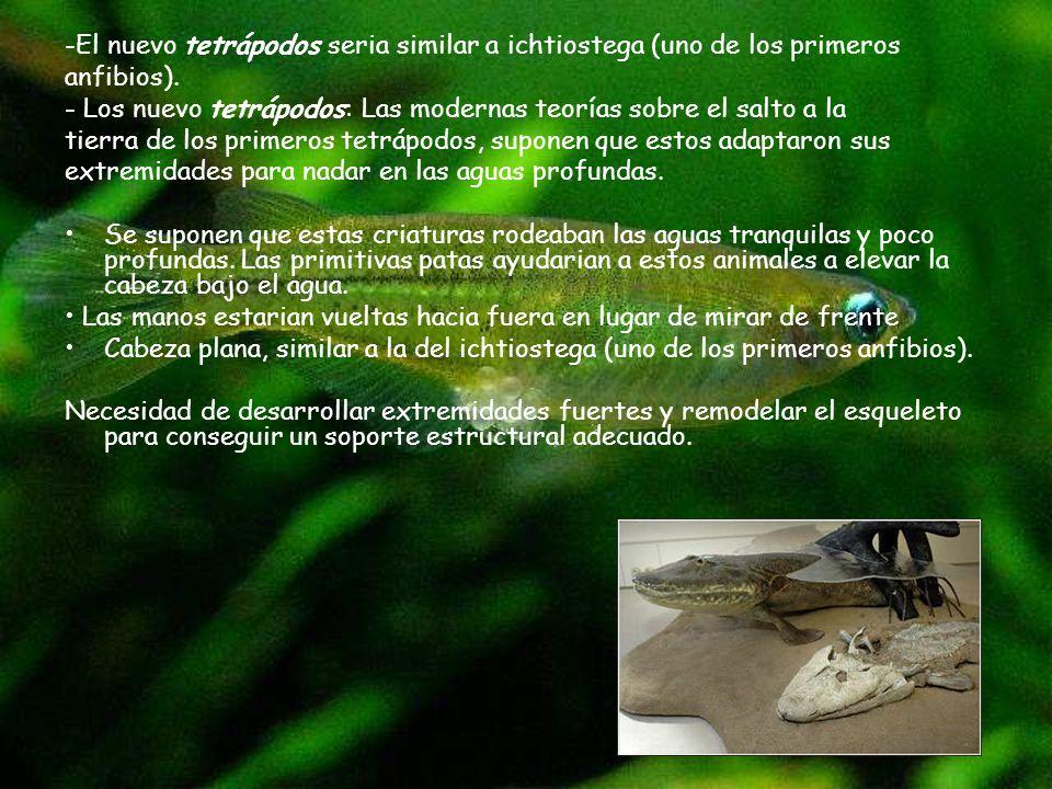 -El nuevo tetrápodos seria similar a ichtiostega (uno de los primeros
